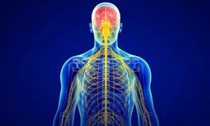 Lee más sobre el artículo Kinesiología Aplicada y Quiropráctica